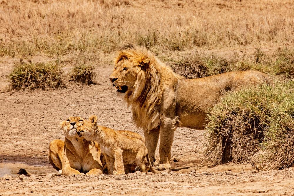 Serengeti2018-WateringHole-55.jpg