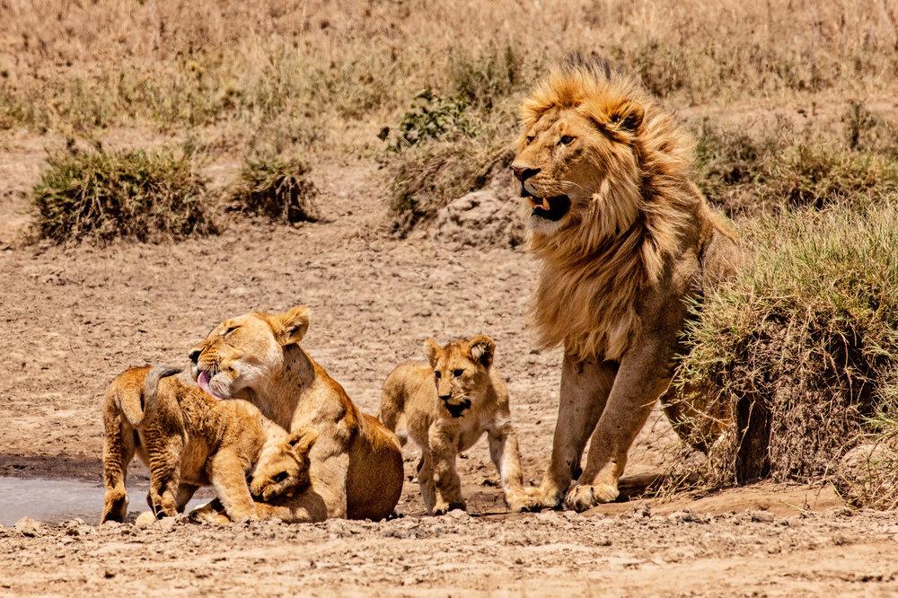 Serengeti2018-WateringHole-57.jpg