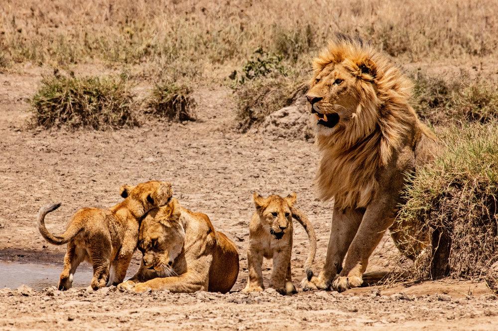 Serengeti2018-WateringHole-58.jpg