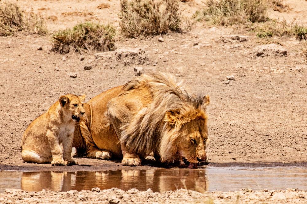 Serengeti2018-WateringHole-61.jpg