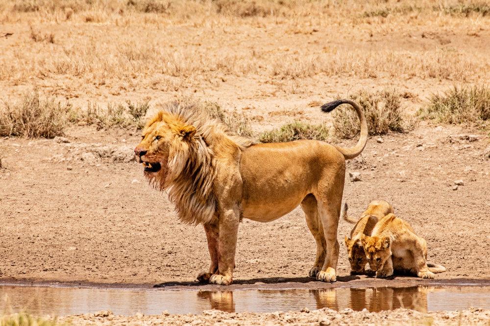Serengeti2018-WateringHole-62.jpg