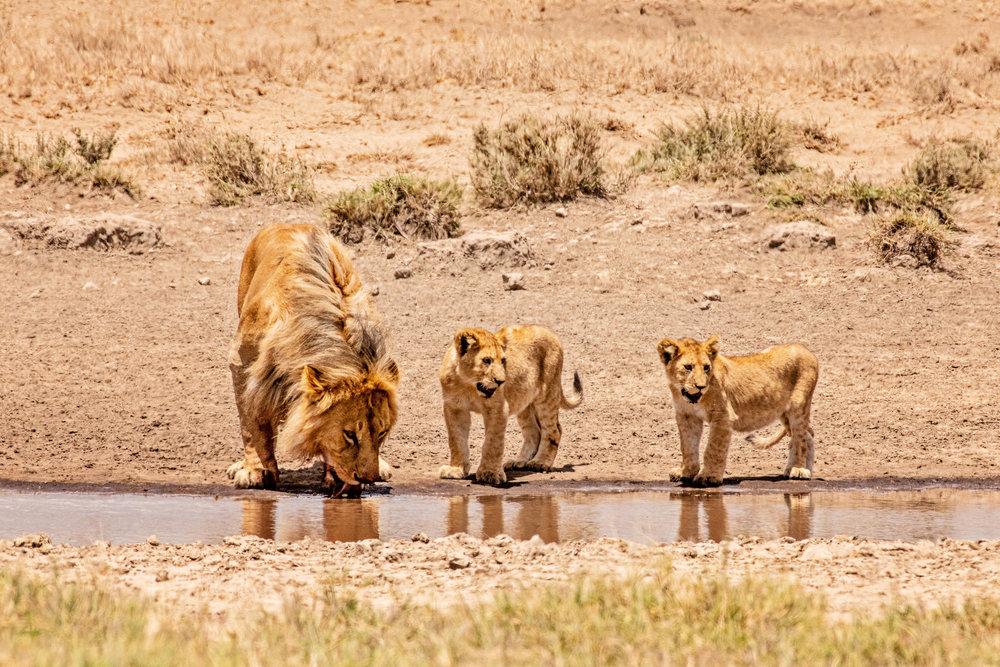 Serengeti2018-WateringHole-63.jpg