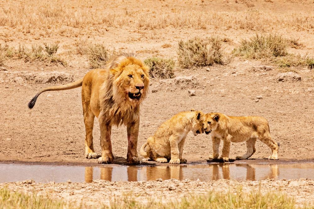 Serengeti2018-WateringHole-64.jpg