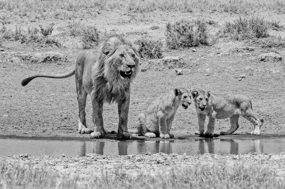Serengeti2018-WateringHole-65.jpg