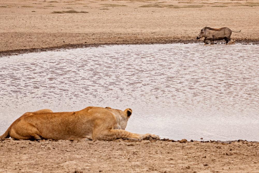 Serengeti2018-WateringHole-66.jpg