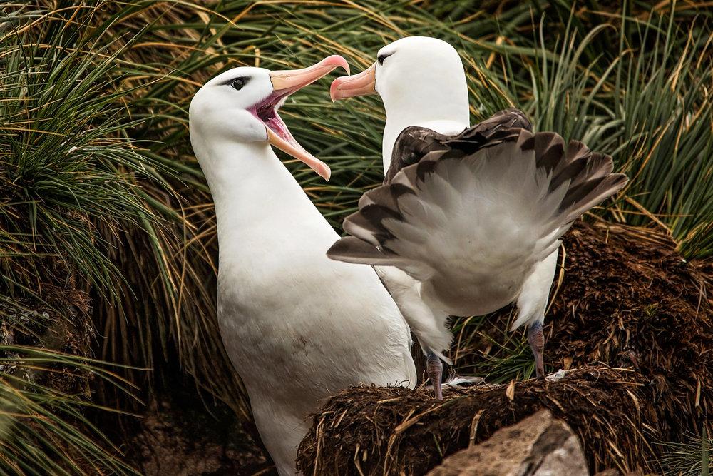 KathleenHertelPhotography-AntarcticaBirds-23.JPG