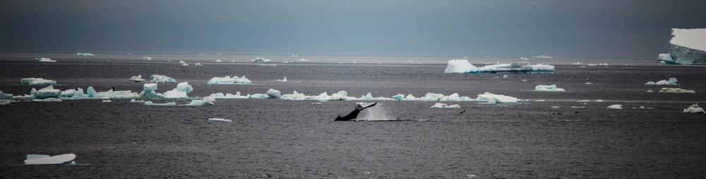 KathleenHertelPhotography-AntarcticaLandscapes-110.JPG