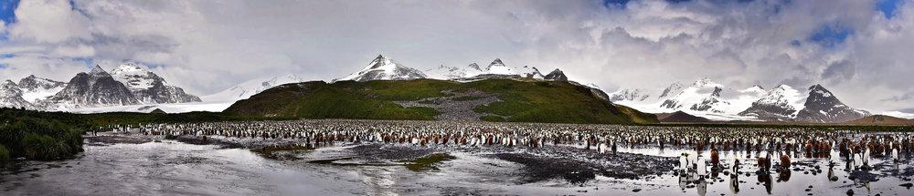 Penguinpano2.jpg