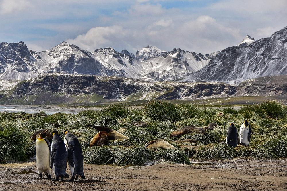 KathleenHertelPhotography-AntarcticaPenguins-60.JPG