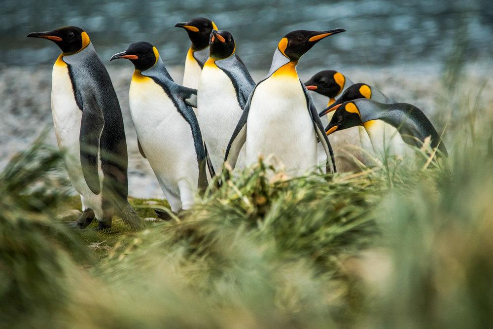 AntarcticaNovember2016-Penguins-5707.jpg