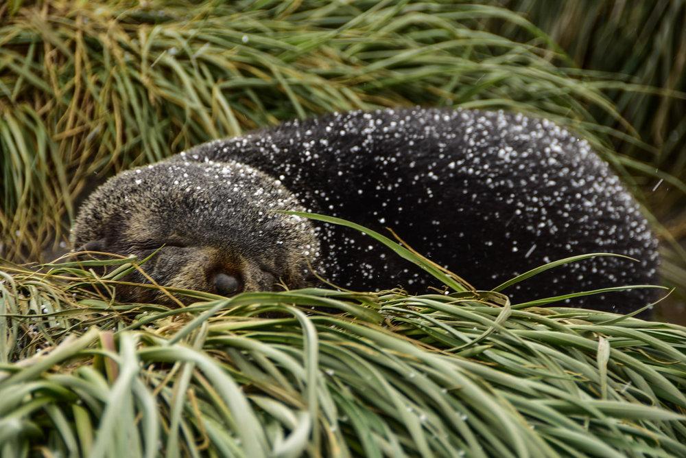 KathleenHertelPhotography-AntarcticaSeals-2.JPG