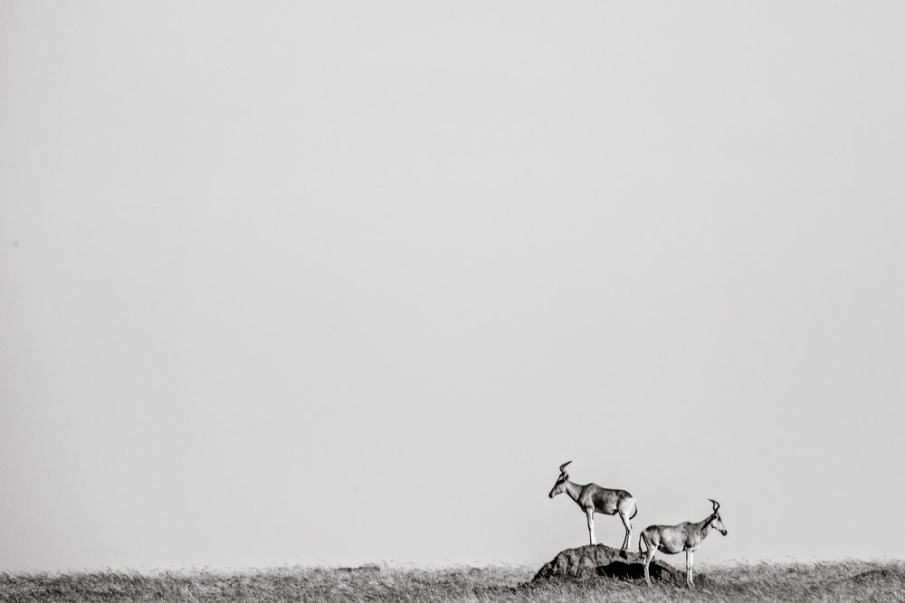 Serengeti2018-Wildlife-3.jpg