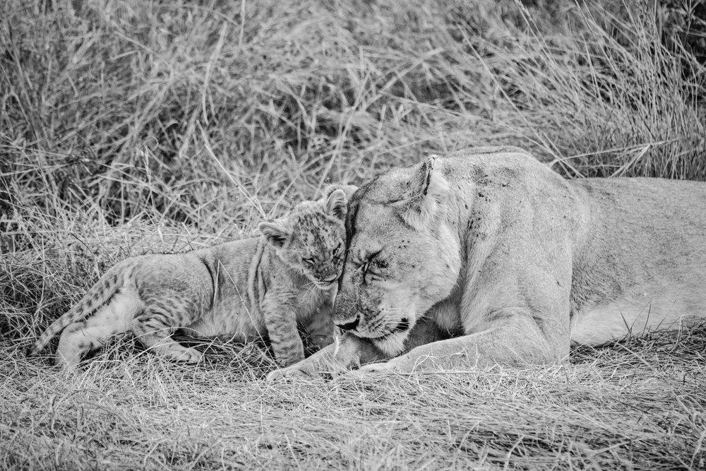 Africa2016.2-143.jpg