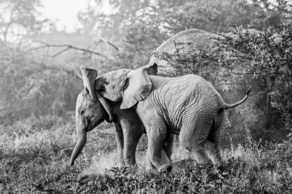 Serengeti2018-Elephants-16.jpg