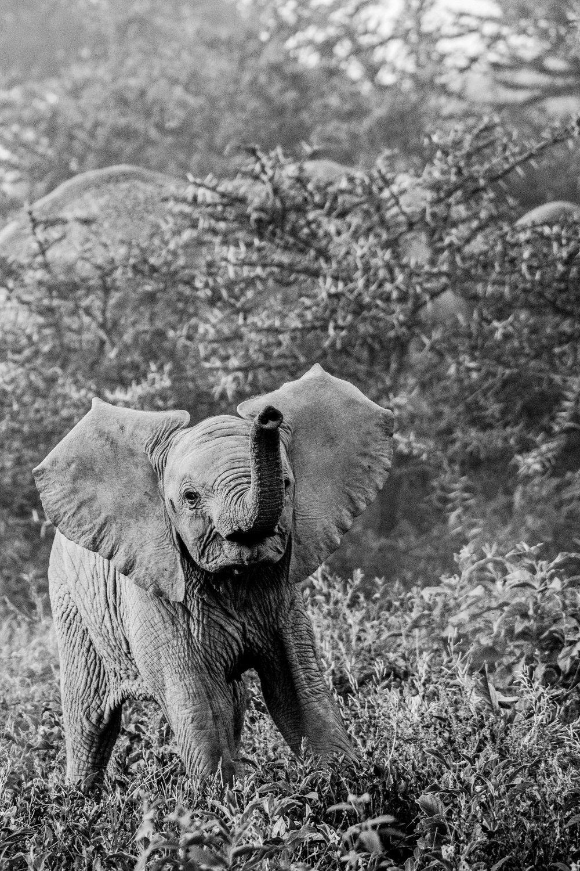 Serengeti2018-Elephants-24.jpg