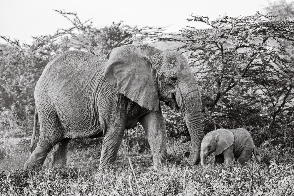 Serengeti2018-Elephants-37.jpg