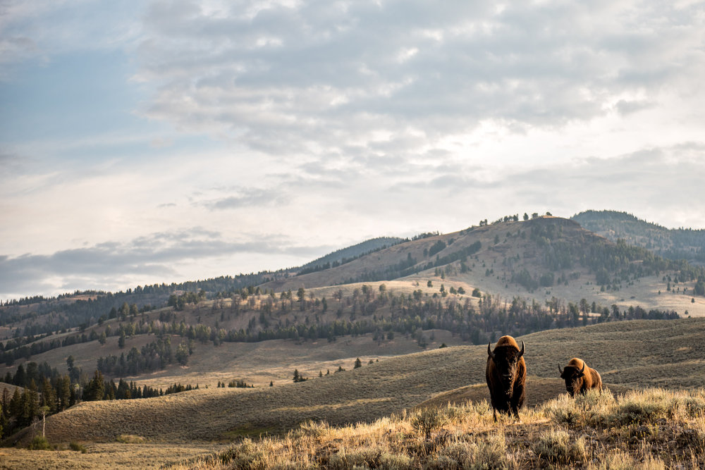Yellowstone2017-22.jpg