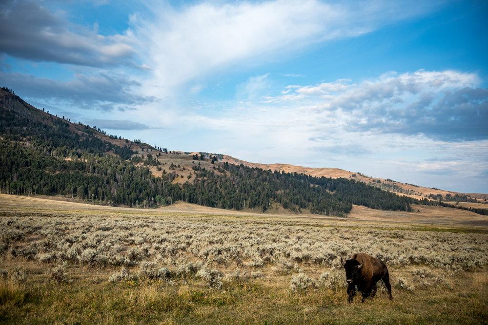 Yellowstone2017-20.jpg