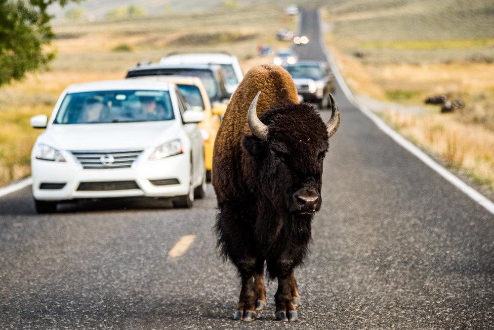 Yellowstone2017-65.jpg