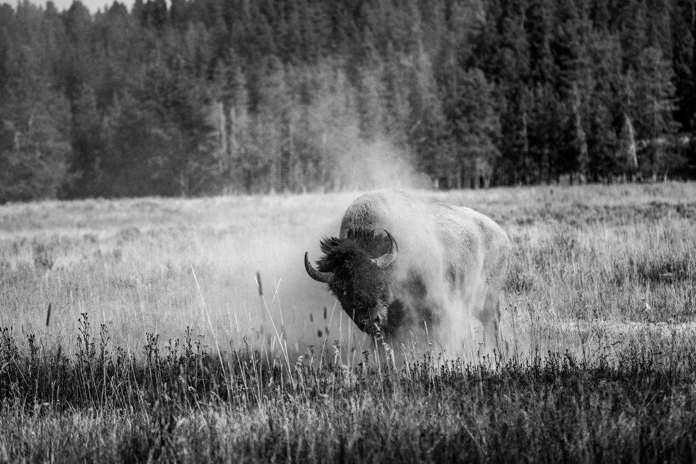 Yellowstone2017-74.jpg