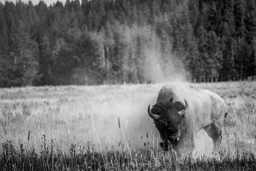 Yellowstone2017-75.jpg