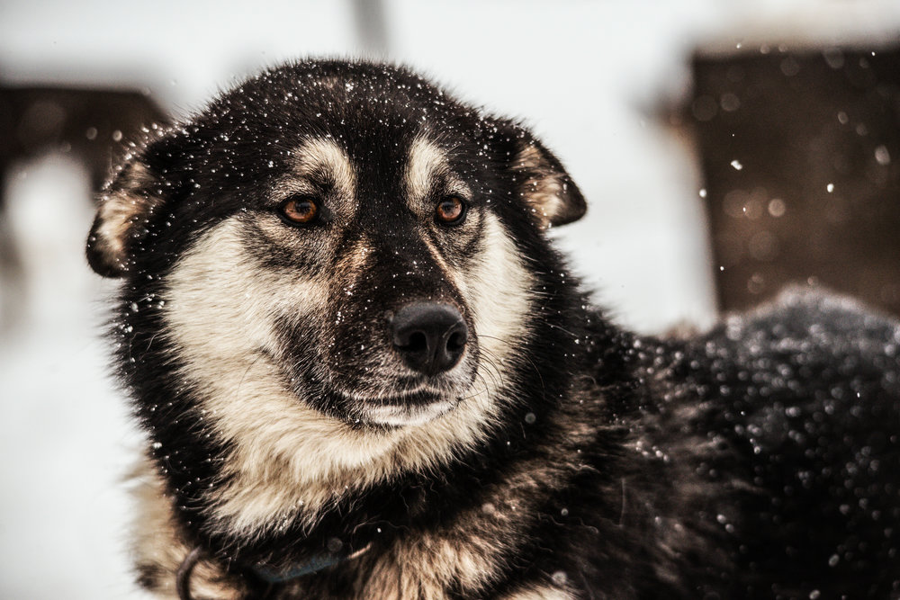 AlaskaPolarBear2015-413.jpg