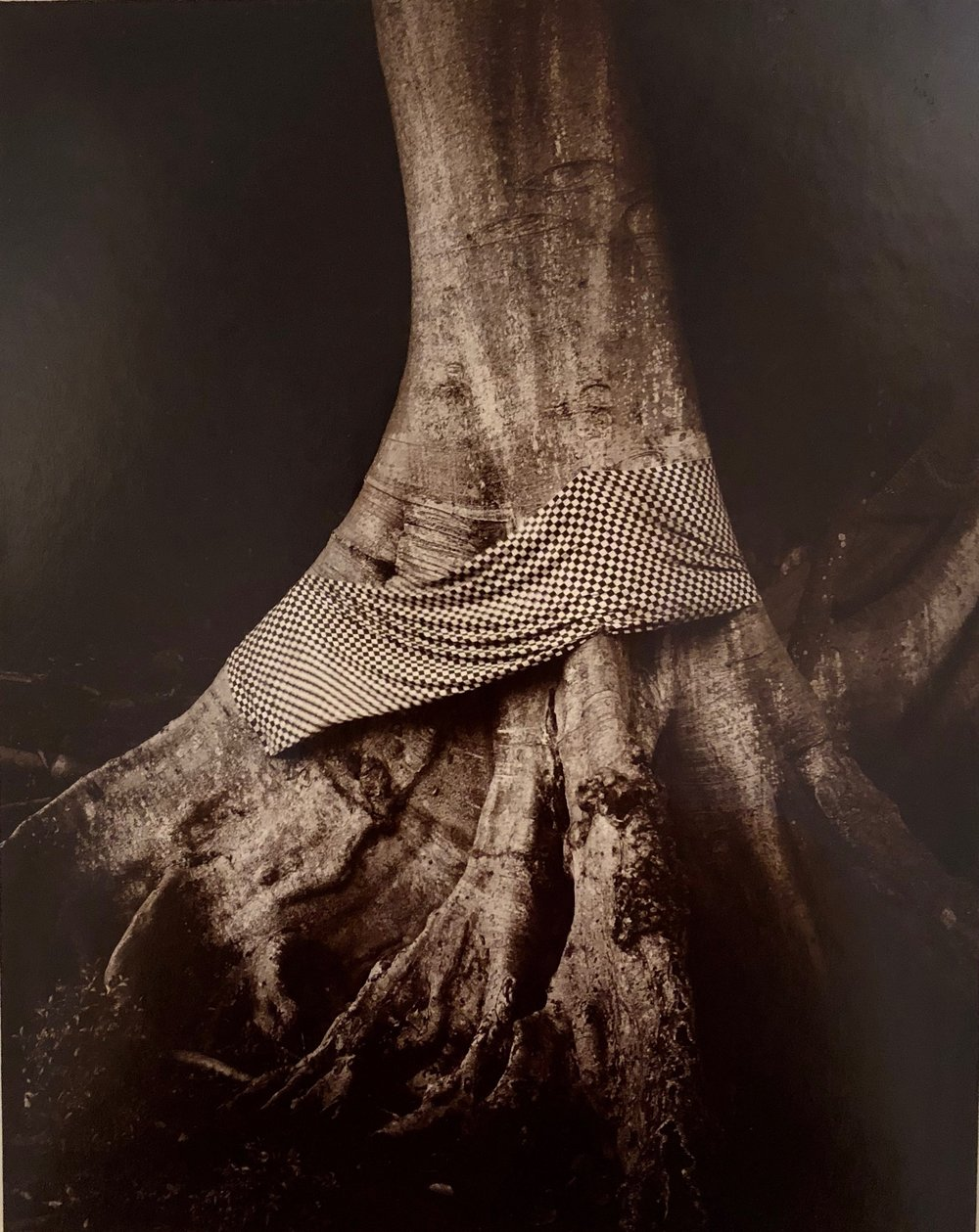 Linda Connor,  Tree Decorated with Sacred Cloth , 1991, contact-printed photograph toned with gold chloride