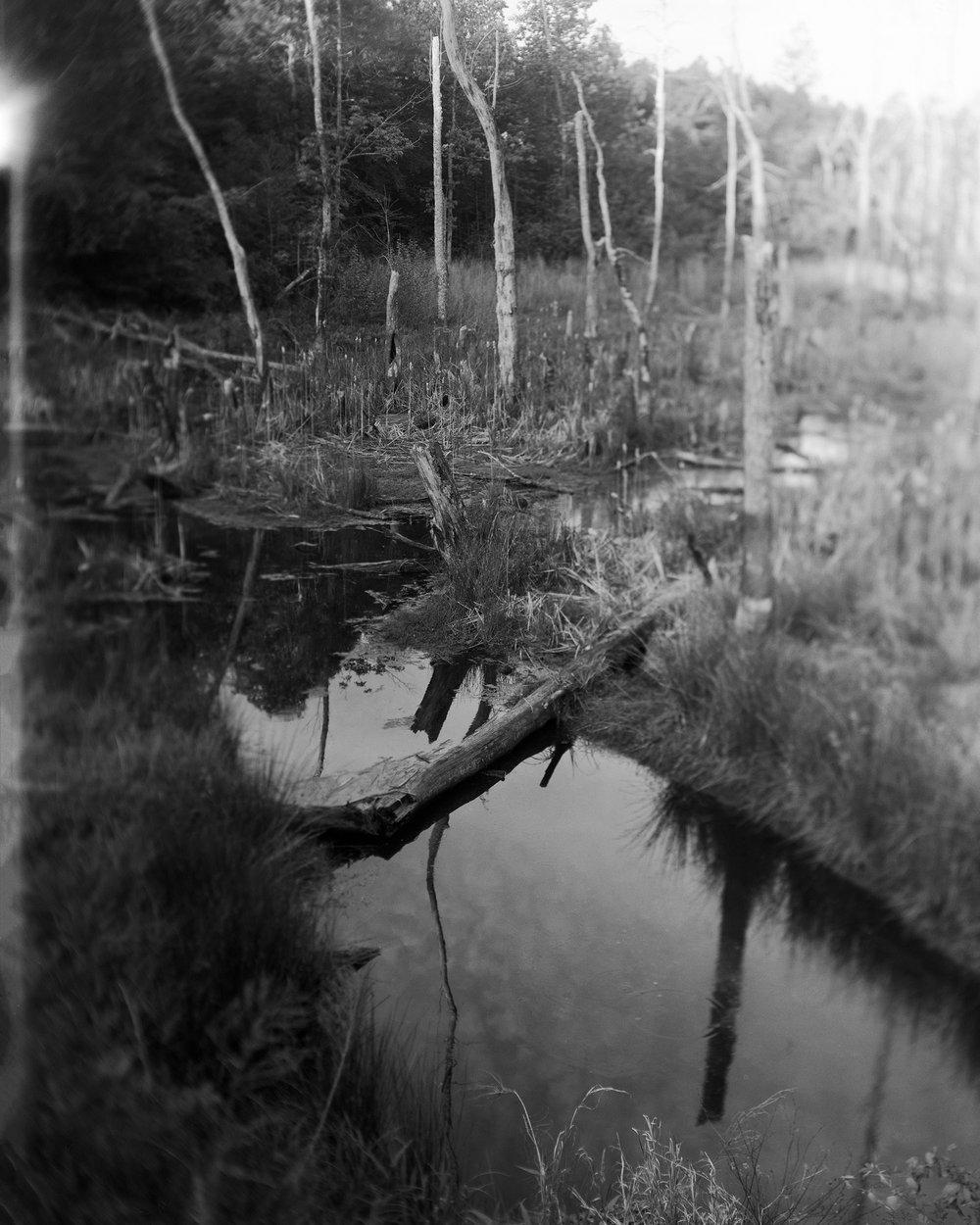 Jessica Taylor,  Roadside Swamp , 2017, archival inkjet print