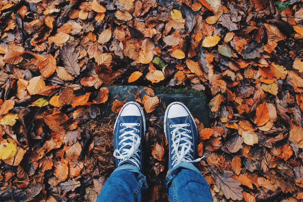 autumn-close-up-color-267313.jpg