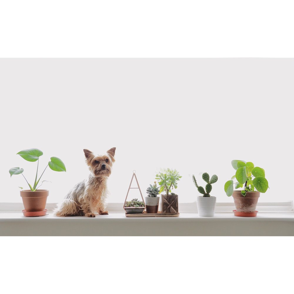 Kate Wainwright | Pup and Plants
