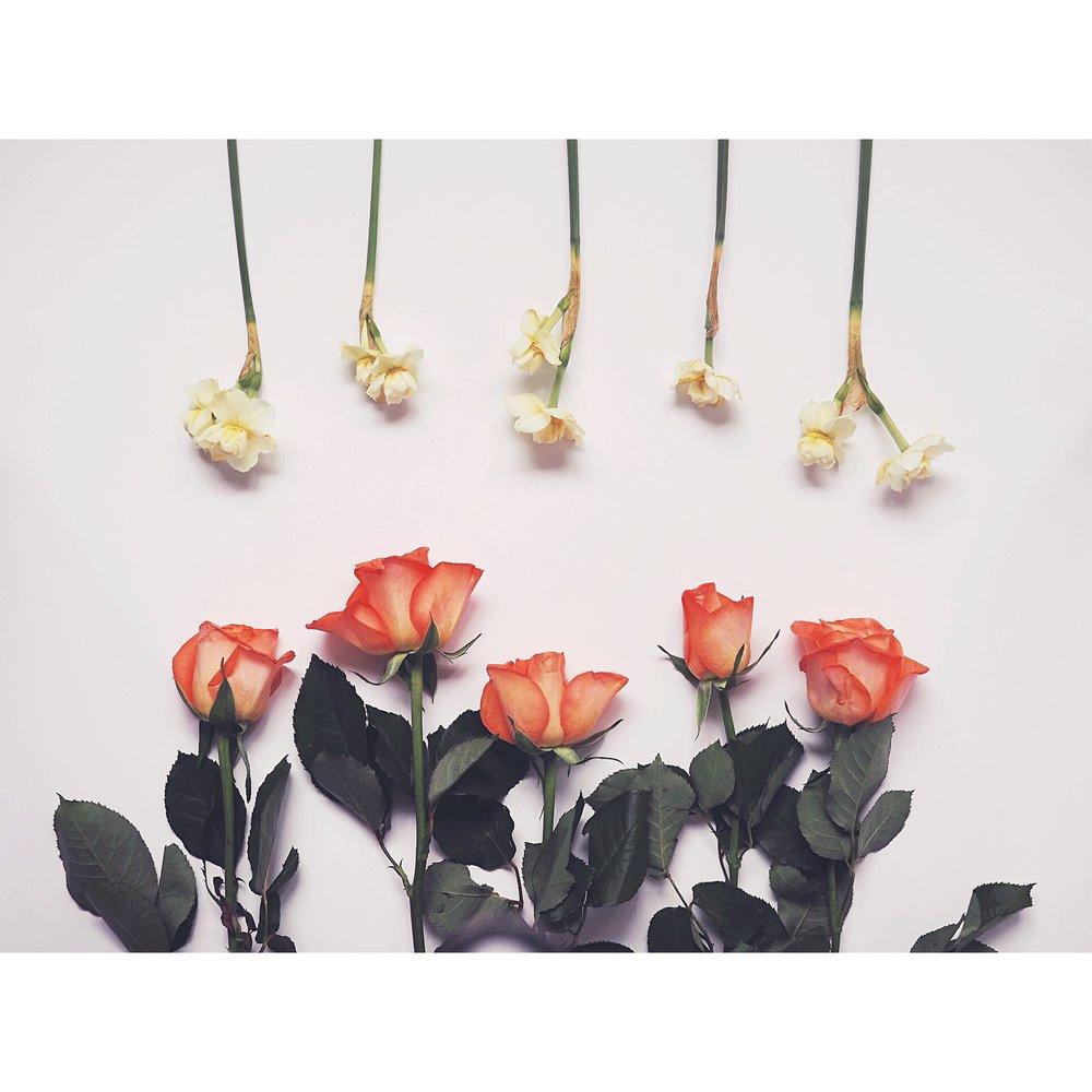 Kate Wainwright | Daffodils and Roses
