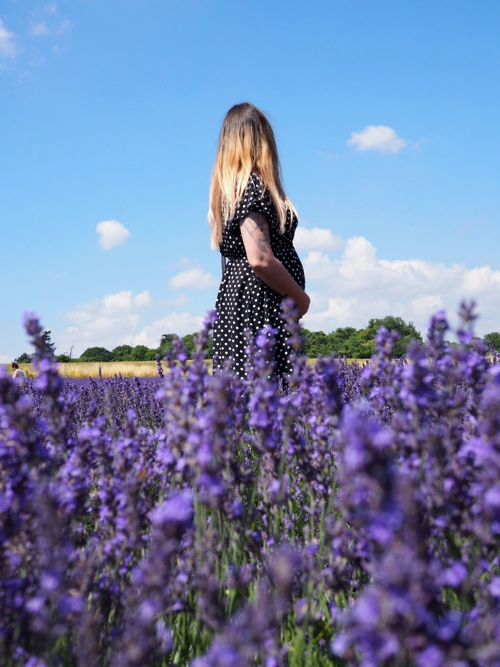 Lordington Lavender farm Sussex