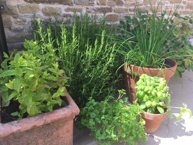 herb_garden_containers.JPG