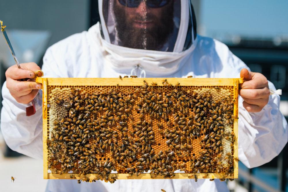 Bees_EmpressGreen-29.jpg