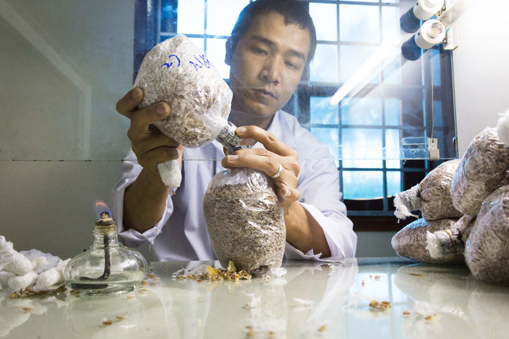 Mushroom with a mission | Project RENEW | NGO Photographer in Vietnam | Francis Roux