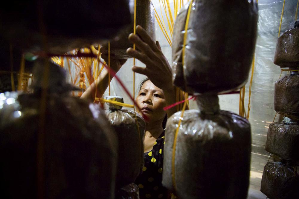 Mushroom farming | Project RENEW |  Southeast Asia NGO Photographer | Francis Roux Portfolio