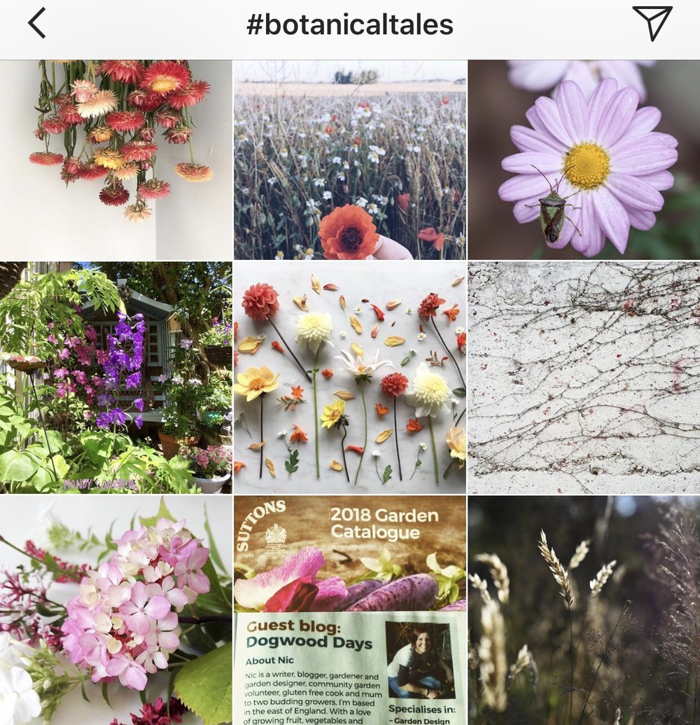 Top posts in the Botanical Tales Gallery