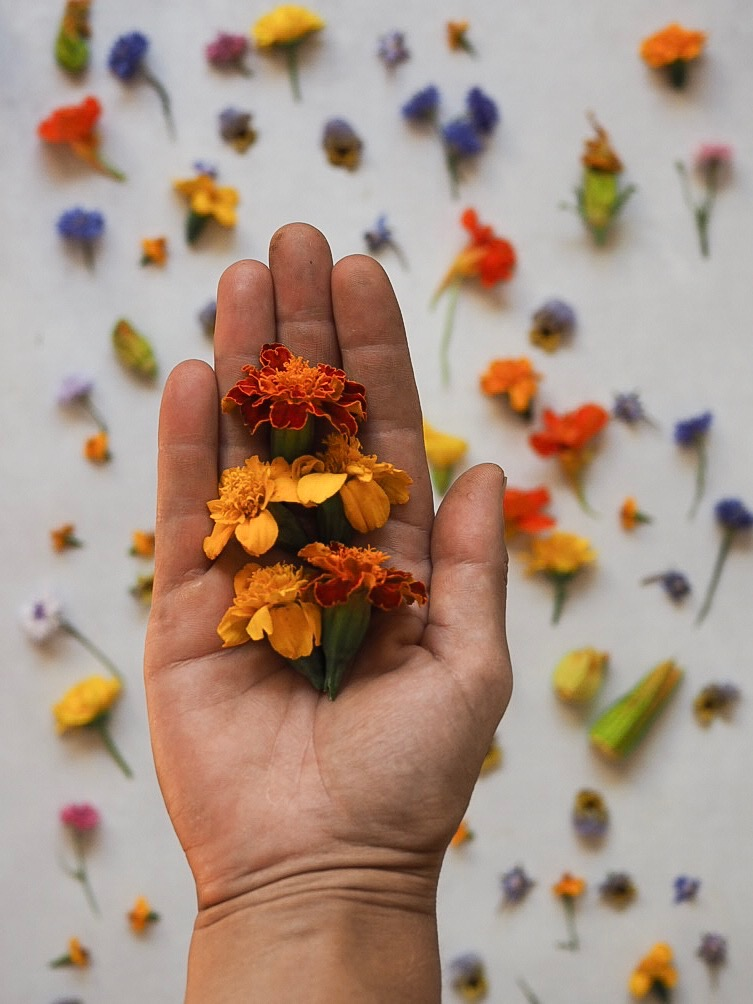 Marigolds Edible Flowers