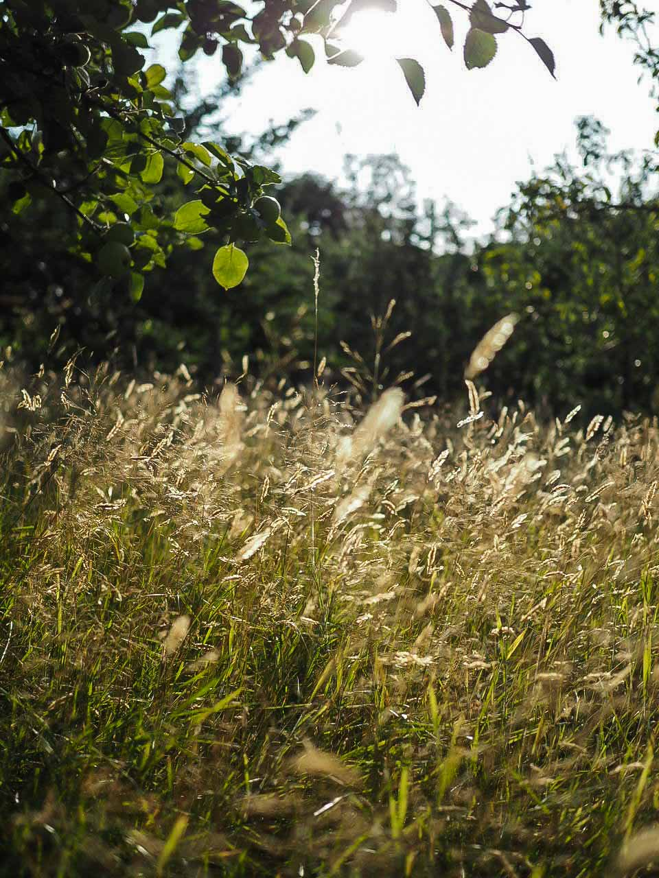 Golden hour at wild meadow, eco holidays with children