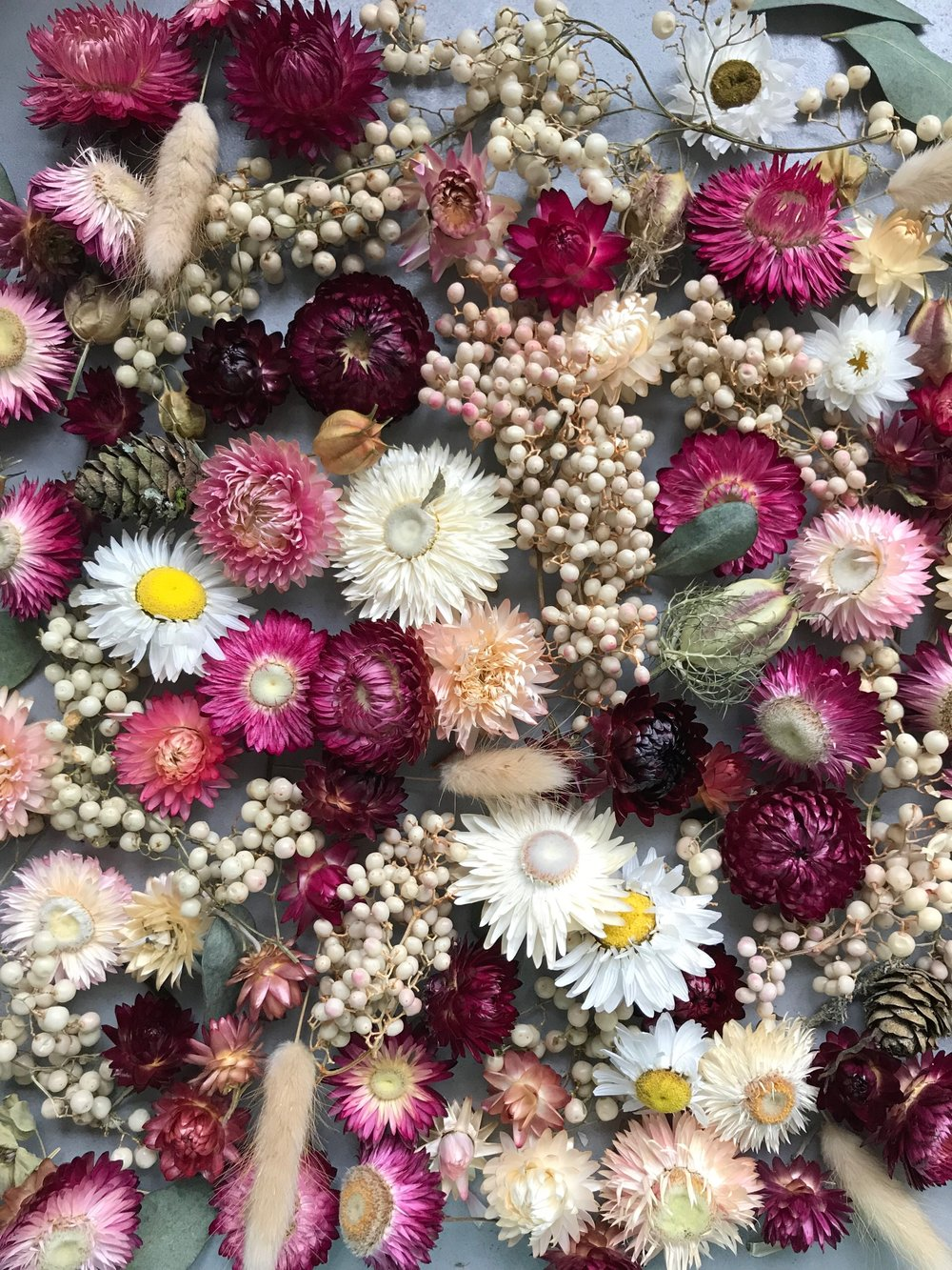 A guide to growing dried flowers