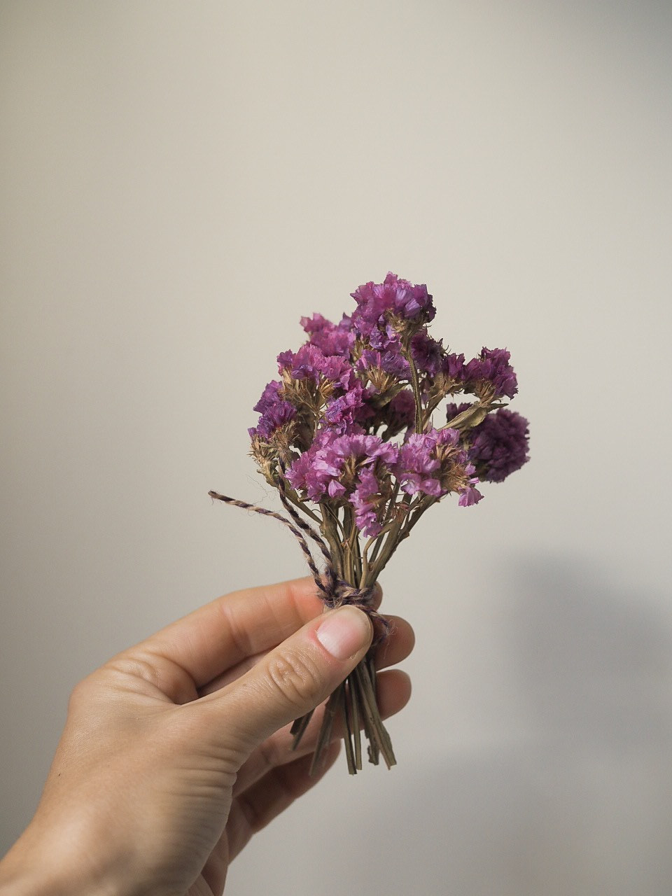 Statice purple dried flower