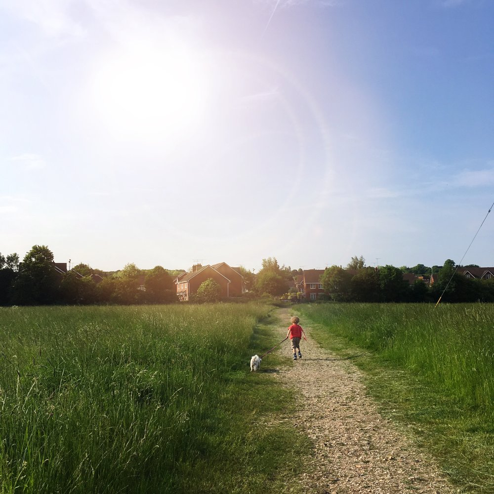 Dog walking in the sunshine