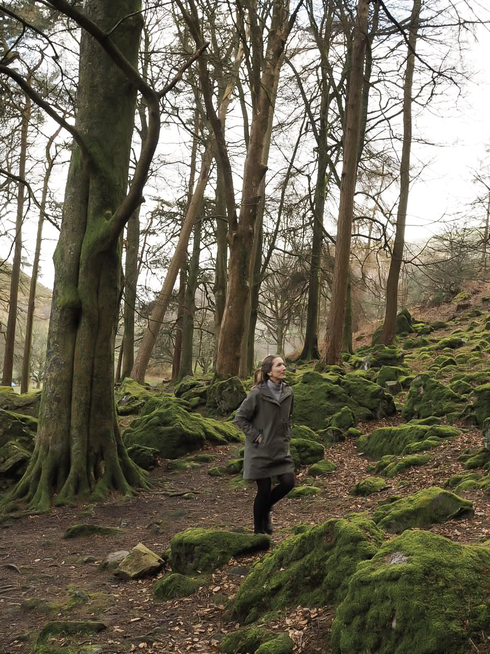 Forest bathing in welsh woodland