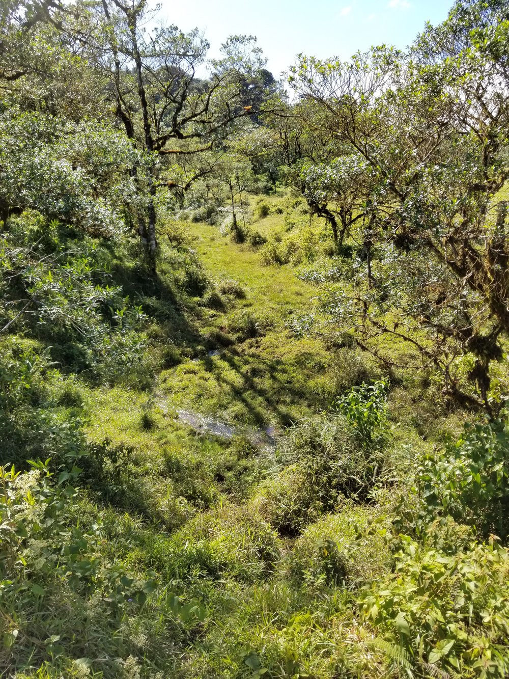 Riparian zone near San Ramon, Costa Rica