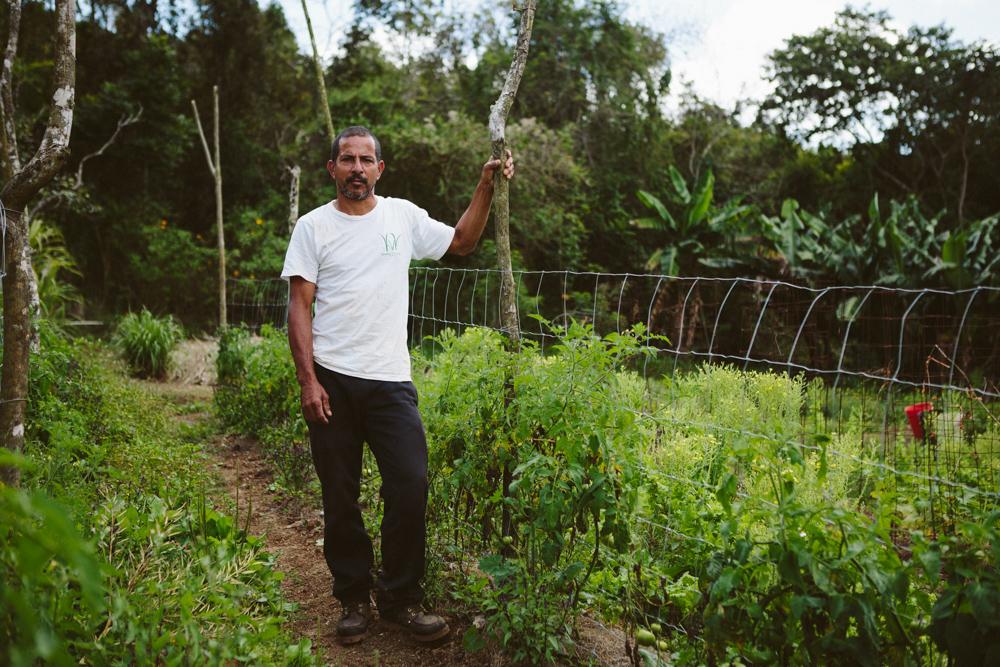 Edwin Rosario Soto - Agricultor - Co-fundador-Gerente de operaciones.Con más de 35 años de experiencia, Edwin maneja los aspectos prácticos del día a día en la siembra.