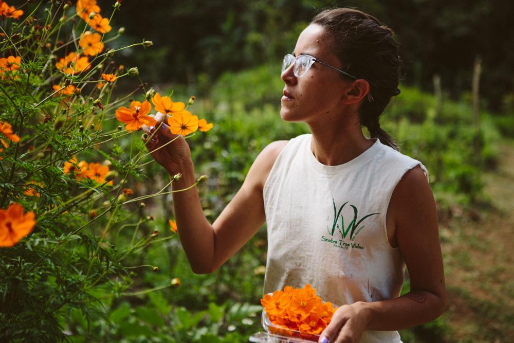 Daniella Rodríguez Besosa - Agricultora - Gerenta de MercadeoSiempre buscando nuevas variedades y tendencias, Daniella maneja el   programa de CSA y las ventas a restaurantes.