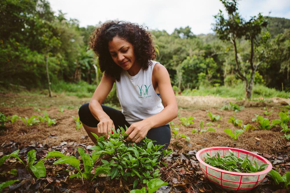 Limari Cora Huertas - Agricultora - Gerenta de AdministraciónEgresada del Proyecto Agroecológico del Josco Bravo en 2016, Limari comparte la visión de la agroecologia como la herramienta más eficiente para lograr la soberanía alimentaria y el crecimiento del bienestar total de la sociedad puertorriqueña.