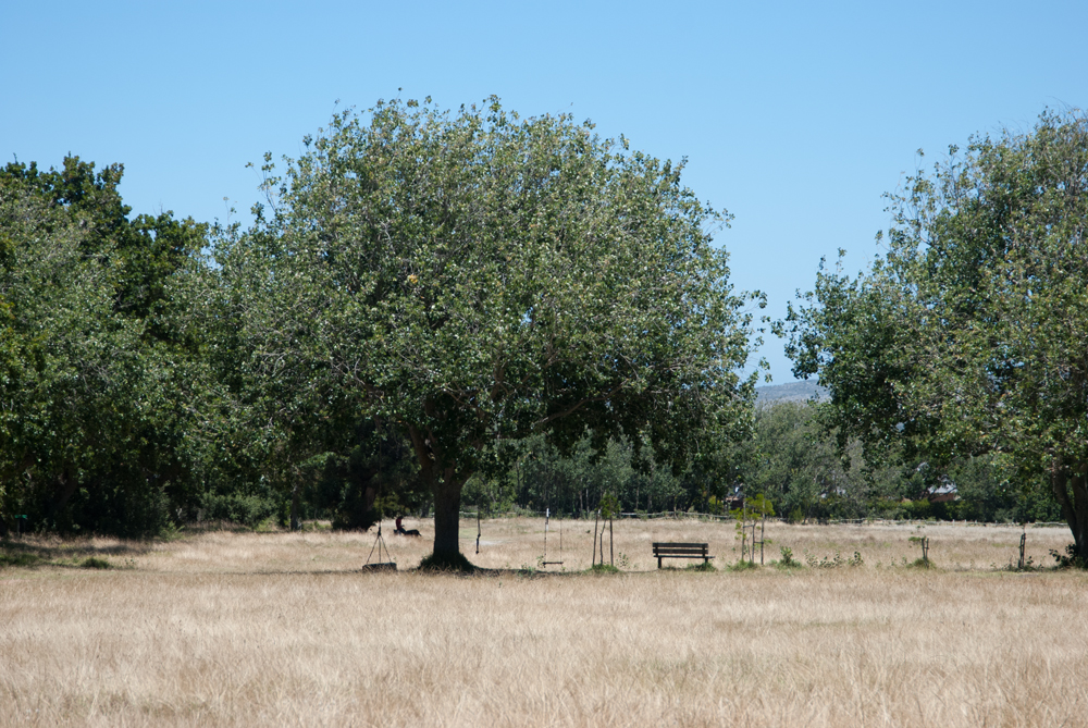 Beesntrees_Locations_ZA_098.jpg