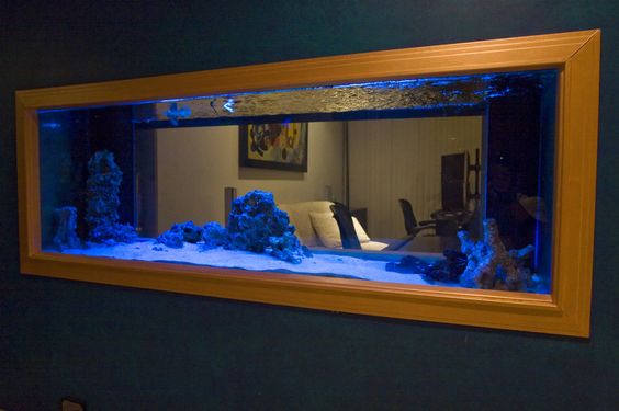 2 Room Shared Aquarium