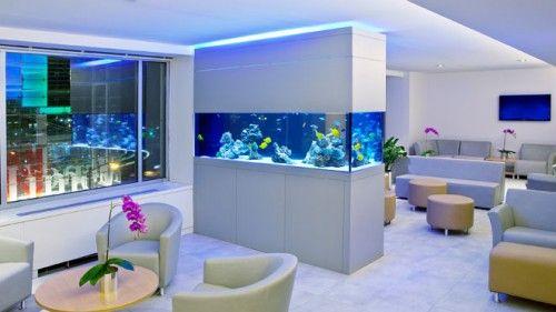 Open Concept Aquarium